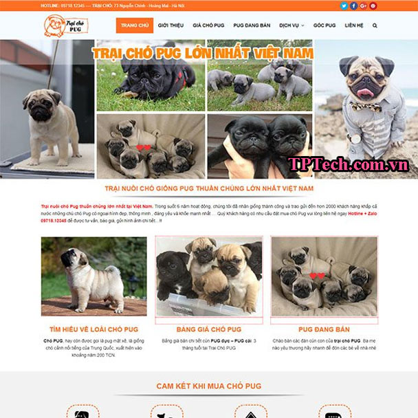 Mẫu website bán chó cảnh đẹp TP43